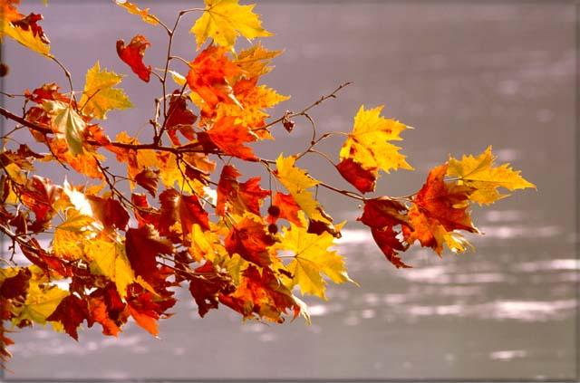 Colori d 39 autunno - Immagini di tacchini a colori ...